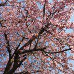 【閑話休題】春間近【写真】