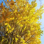 【写真】初冬の紅葉【散歩道】